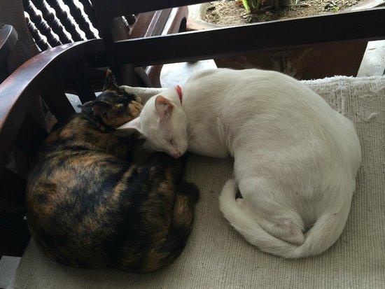 Manee Guest House : кошки