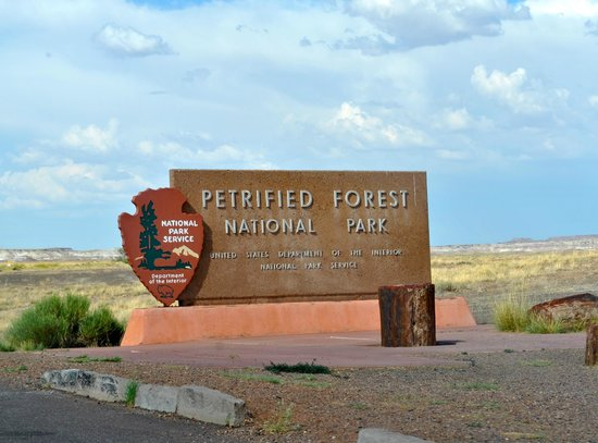 Painted Desert : Petrified Forest