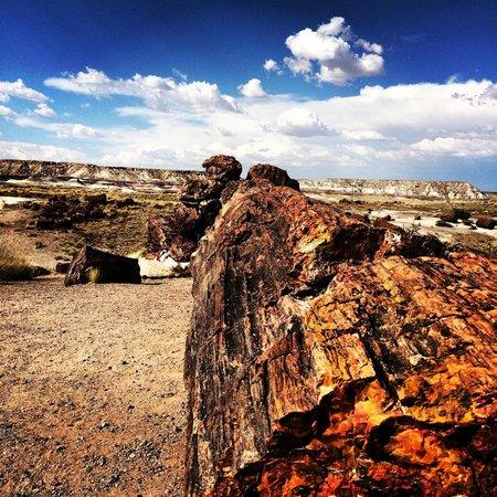 Painted Desert : Petrified Trees