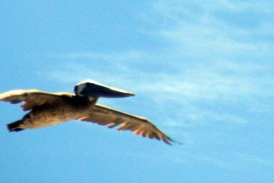 Bird Flying By, Fitzgerald Marine Reserve, Moss Beach, Ca