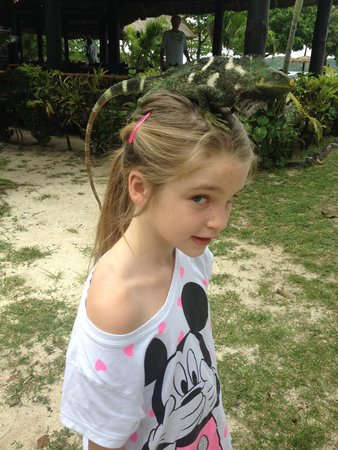 Nanuya Island Resort: Jessica with a green iguana at the resort