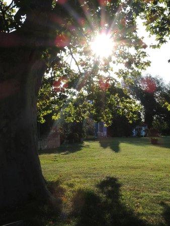 Mas Petit Fourchon : nice and large garden