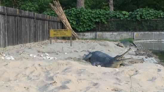 Eco Wildlife Lodge: The crocodile breeding centre.
