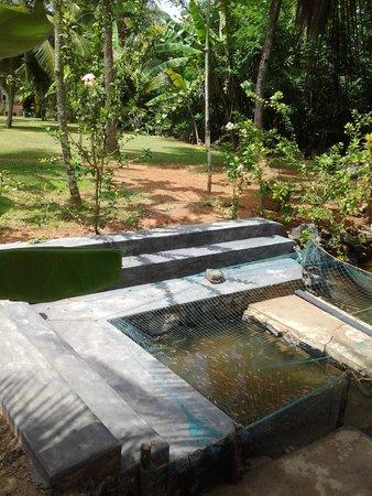 Villa Gaetano : Fish Therapy