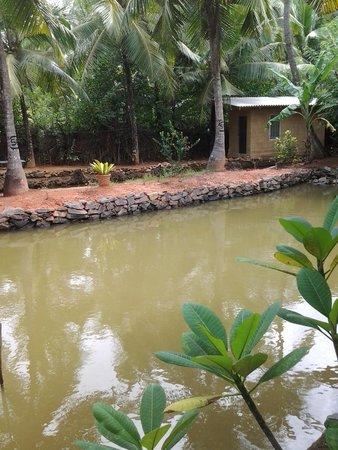 Villa Gaetano : Natural Fish Pond in the Garden