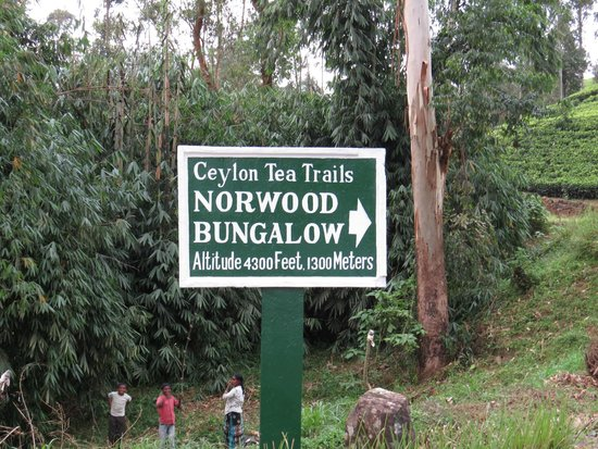 Ceylon Tea Trails (Aug 2013): Road sign to Norwood Bungalow
