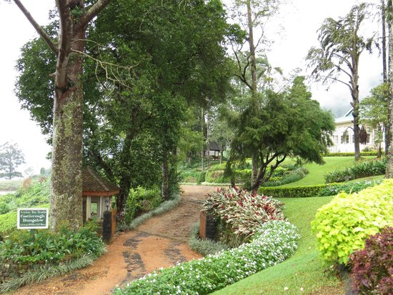 Ceylon Tea Trails (Aug 2013): Castlereagh Bungalow