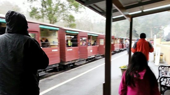 Puffing Billy Railway: The train while walking to the entrance.