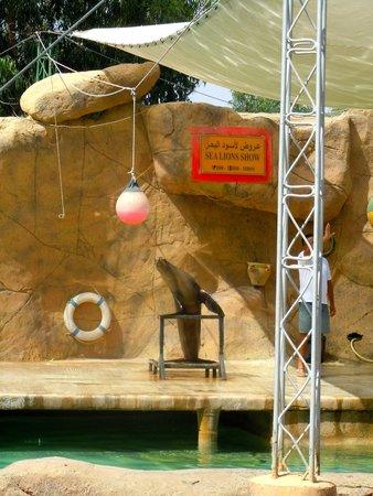 Friguia Park: Seal lion show