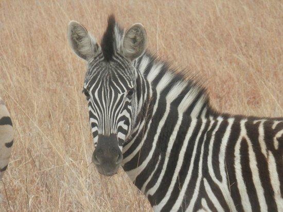 Elephant Rock Private Safari Lodge: I see you