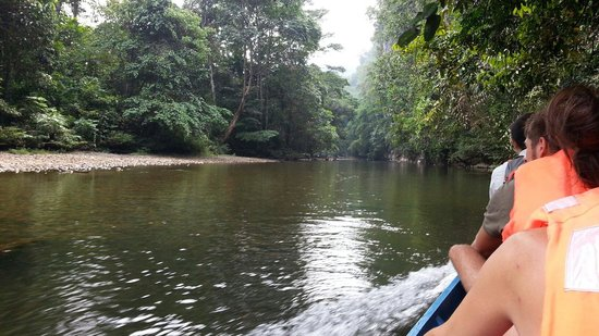 Mulu World Heritage Area: The river boat cruise to the caves.