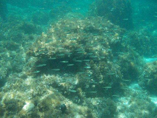 Hornblower Cruises: Fish in Blue Lagoon