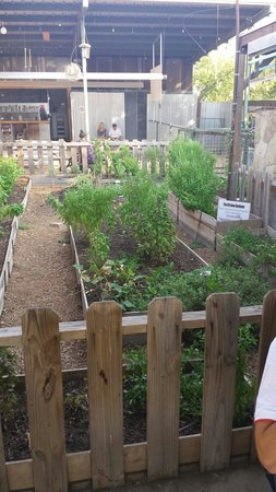 The Cove : Their fresh garden