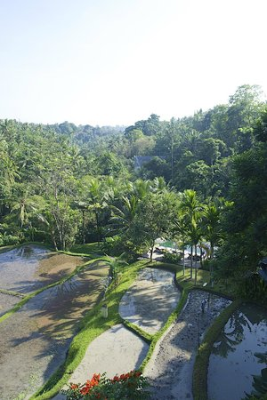 Komaneka at Bisma : View from room
