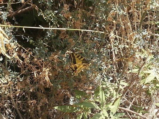 Butterfly Valley : İşte benim görebildiğim bir kelebek
