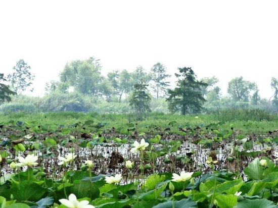 Airboat Tours: Beautiful nature
