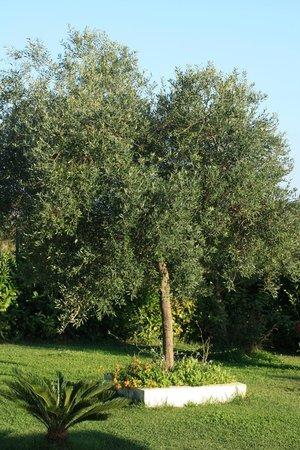 Casa Mediterranea: ulivi e macchia mediterranea