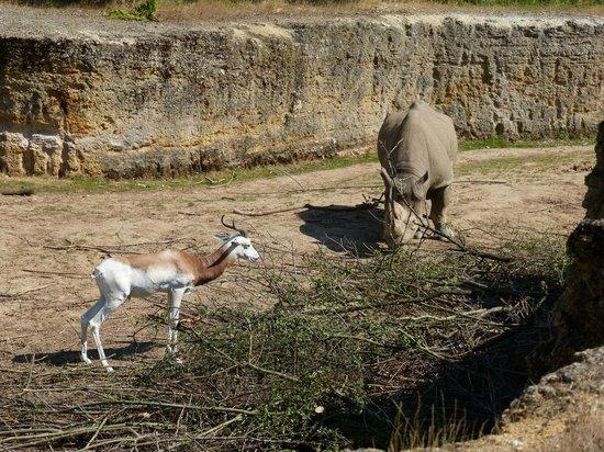 Bioparc de Doué la Fontaine : Vallée des rhinocéros