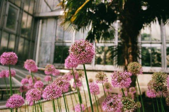 Plantentuin: Цветы в мае