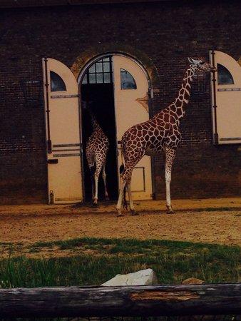 ZSL London Zoo: Time to sleep