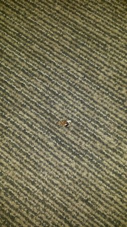 HYATT house Miami Airport: Dead roach on floor for 2 days, they don't clean