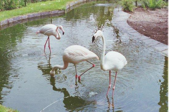Parco della Villa Pallavicino: fenicotteri