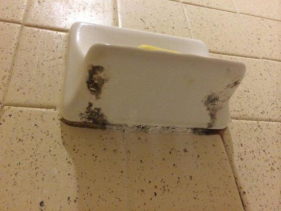 Extended Stay America - Houston - Med. Ctr. - NRG Park - Braeswood Blvd : Mold in shower under soap dish