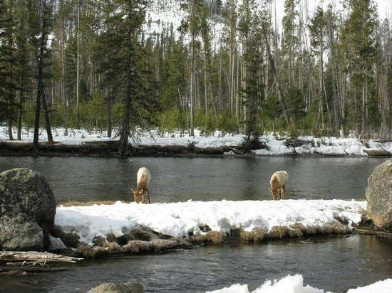 Three Bear Lodge: Ейллоустоун НП