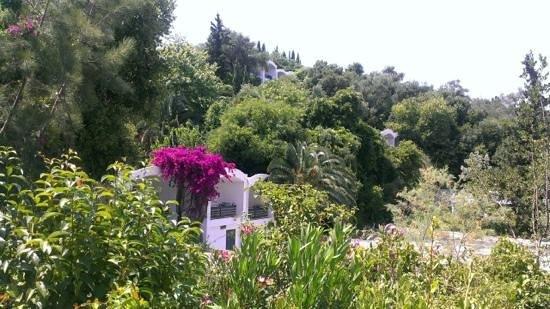 Grecotel Daphnila Bay Dassia: территория отеля (бунгало)