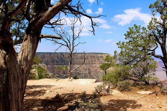 Grand Canyon South Rim: south rim
