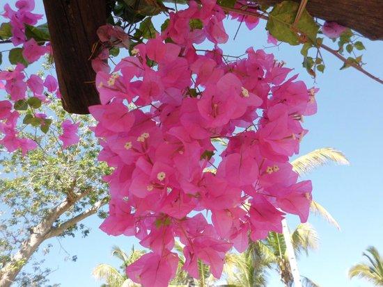 Andilana Beach Resort: assaggio di vegetazione