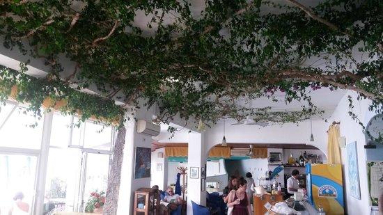 Hotel Casa Rosa: Ficus Benjamini im Salon