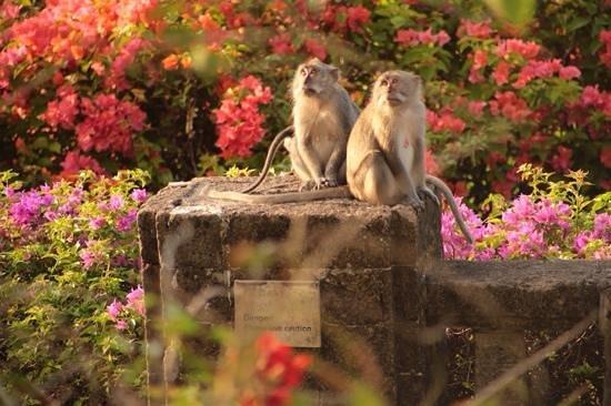 Grand Nikko Bali: Oceanview room, morning visitors
