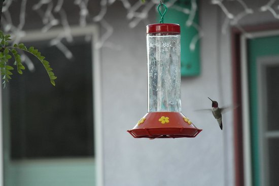 Cozy Cactus Bed and Breakfast : Humming bird feeder