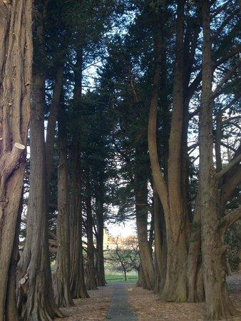 Site historique de Port Arthur : A soldiers avenue