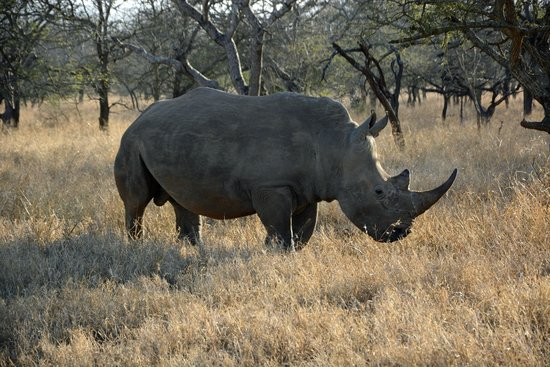 Naledi Game Lodges: Rhino.