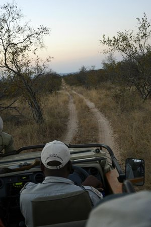 Naledi Bushcamp and Enkoveni Camp : Game ride.