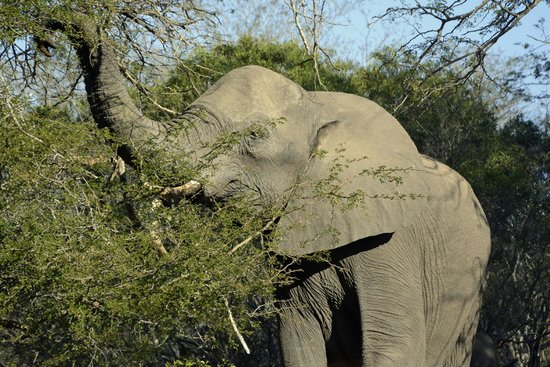 Naledi Bushcamp and Enkoveni Camp : Elephant!