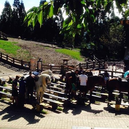 Cingjing Veterans Farm : 騎馬體驗上馬區