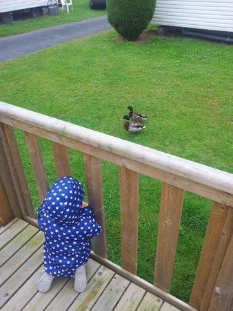 Les Ormes, Domaine & Resort: Ducks coming for breakfast