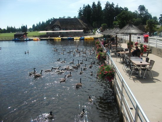 Les Ormes, Domaine & Resort : Feeding the ducks/geese