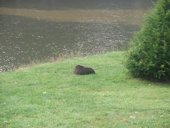 Domaine des Ormes : Pond