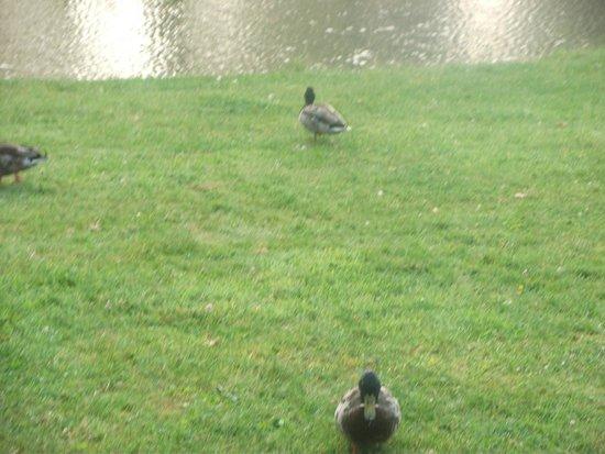 Les Ormes, Domaine & Resort : Pond