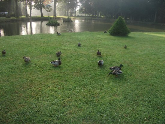 Les Ormes, Domaine & Resort: Ducks at second pond