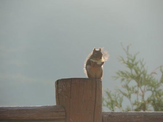 Hotel Sacacomie: Notre ami l'écureuil présent pour l'apéro