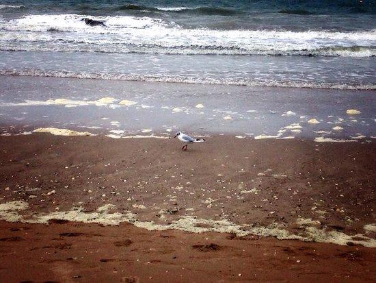 Plage de Deauville : Чайка на пляже Довиля