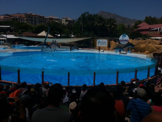 Selwo Marina : De dolfijnenshow