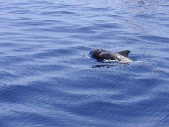 H10 Tenerife Playa: whales