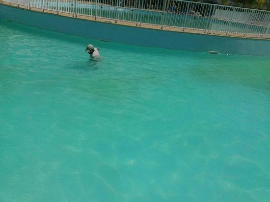 Iberostar Playa Blanca : Piscina verde llena de mierda con cubano limpiando