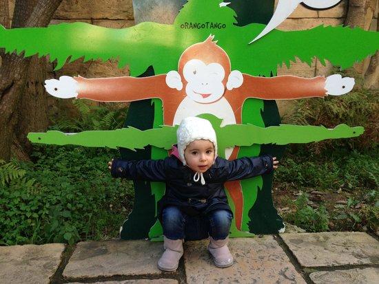 Lisbon Zoo: Foto da nossa pequena na zona dos símios